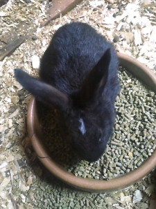 End of summer rabbit sale price reduced !