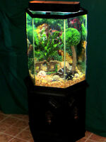 SUPERBE AQUARIUM EXAGONALE 35 GALLONS, VISION PANORAMIQUE !!!