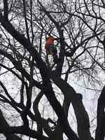 Tree Removal,Storm clean up  ,Trimming.705-294-1314