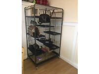 Gorgeous Boy and Girl Chinchillas with Brand New Large Cage,food and all Accessories