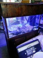 56 Gallon Salt Water Tank with Stand and Sump
