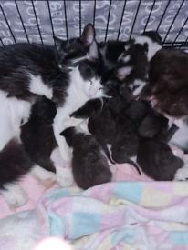 Beautiful kittens.