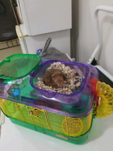 Hamster with cage & accessories