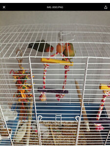Two love birds for sale complete with cage