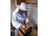 Wanted - Honey Bees