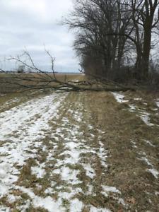 Looking for a Woodlot bush