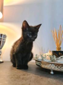 10 weeks old kittens