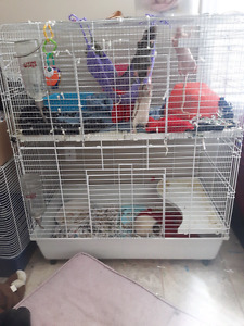 Large cage + rats