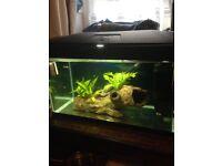 Fish r fun 54litre tank