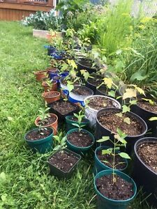 Wanted: soil for tree transplants