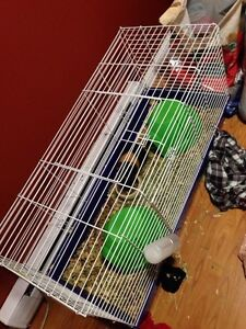 large animal or Guinea pig cage