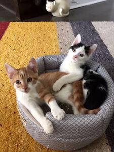 Special needs kittens