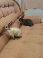 7 Month Old Bunnies