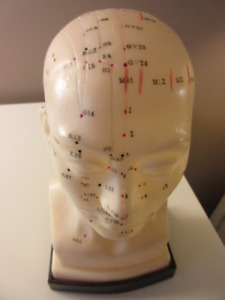 Human Head Acupuncture Model Sculpture Professional Educational