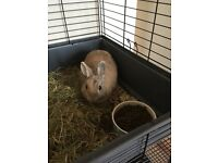 Rabbit for sale!