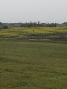 ACERAGE 5+ ACRES WITH PASTURE AREA
