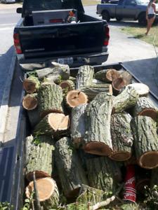 Trailer full of firewood
