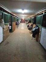 Equine facility seeks stable hand for full time employment