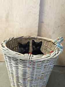 Adorable kittens for sale - FOR FREE $0