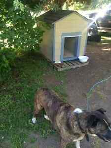 Fully insulated custom dog houses