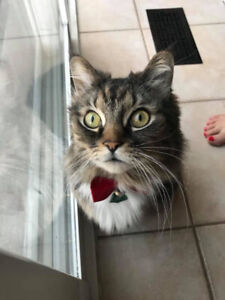 Missing Cat in 400 and Rutherford area
