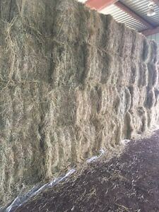 Hay & Straw for sale big square bales