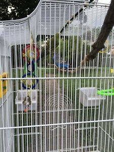 For sale with cage