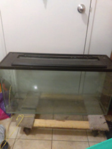 URGENT!! 40 GALLON TANK FOR SALE! NEED GONE ASAP!