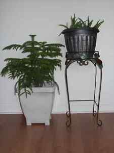 2 house plants and stand