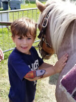 Petting Zoo and Pony Rides - Taking Fall Bookings