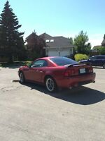 2003 Ford Mustang GT - Low KM