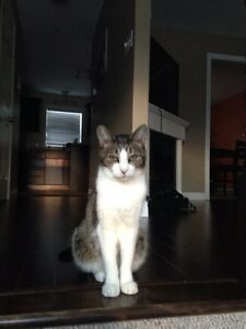 Lost cat in Lower Sackville