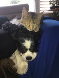 Dog (and cat) sitter