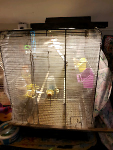 6 zebra  finches and cage