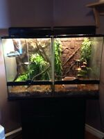 Crested geckos with tanks