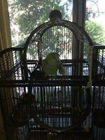 Quaker Perroquet
