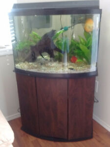 36 gal bow front tank and stand with fish