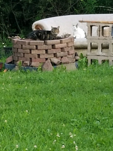 Found two cats