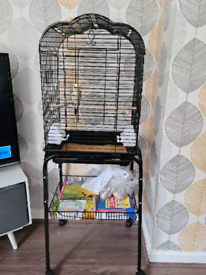 Cockatiel for sale £100 still available