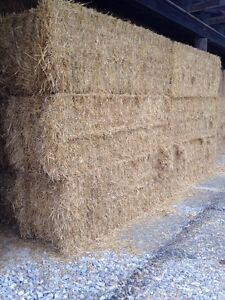 Big Square Straw Bales