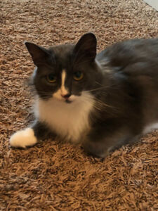 Female Cat 1/12 years old to give away to a loving home