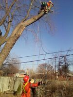 Cheap Small Tree & Stump Removal and Disposal - Free Estimate -