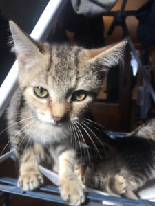Free kittens looking for new home !