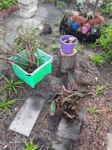 Free plants and cuttings