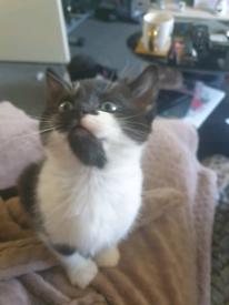 Kittens BOTH RESERVED
