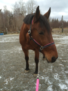 Horse Tack for Sale!