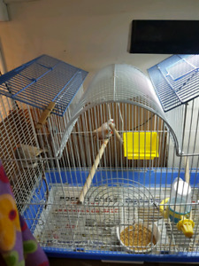 Finches for sale with cage