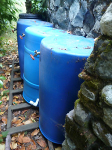 Rain barrels - harvest the rain !
