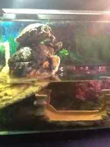 Two red eared sliders for sale with tank, filters,etc.