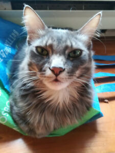 Pet sitter cat sitter in Vancouver